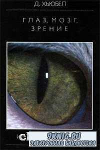 Глаз, мозг, зрение.