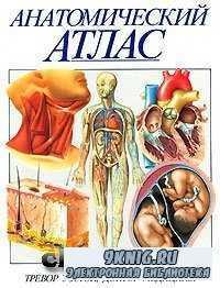 Анатомический атлас.