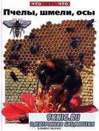 Пчелы, шмели, осы.