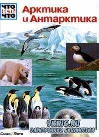 Арктика и Антарктика.