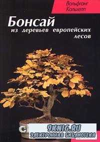 Бонсай из деревьев европейских лесов.