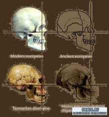 Колчуринский Н.Ю., Лунный А.Н. - Происхождение человека от обезьяны – факт, гипотеза или миф? (2011)